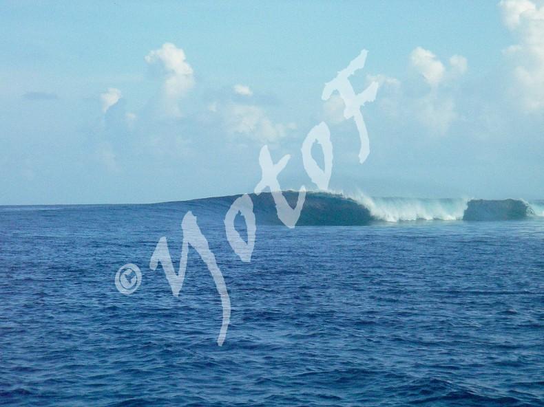 photo de surf 5123